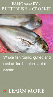 Whole fish round, gutted and scaled, for the ethnic retail sector.