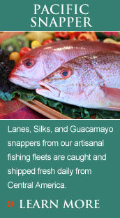 Lanes, Silks, and Guacamayo snappers from our artisanal fishing fleets are caught and shipped fresh daily from Central America.