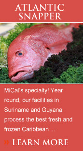 MiCal's specialty! Year round, our facilities in Suriname, Brazil, Nicaragua and Guyana process the best fresh and frozen Caribbean red, Atlantic lane and Yellowtail snapper.